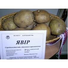 №17 від 30.04.2010 | Як виростити високоврожайну та смачну картоплю